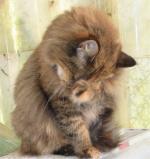 Les chats en chatterie Sdva2-a755a8