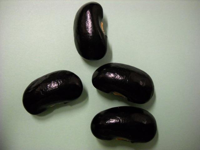 Les haricots d'Espagne et autres Dscn0030modif-214af7e