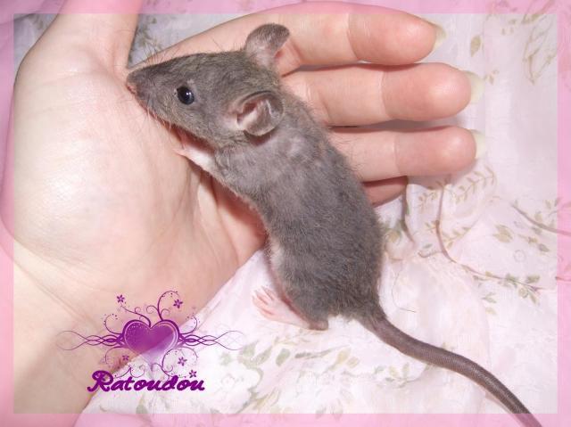 [25] Ma petite Lolita est maman ^^ - Page 2 Dscf5753-10b084c