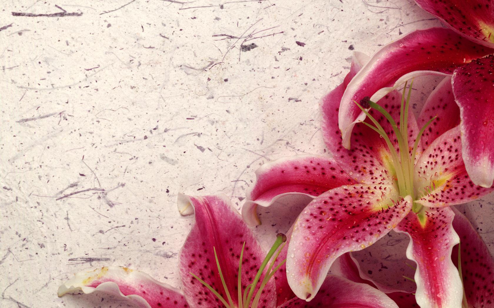 belle fleur-fond-d-ecran-flora