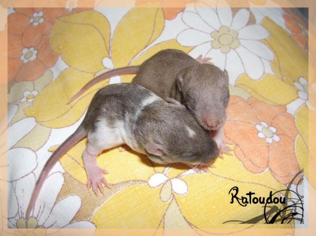 [25] Ma petite Lolita est maman ^^ Dscf5231-101a1cf