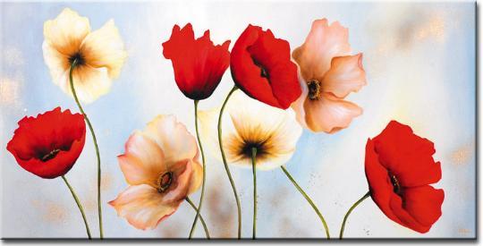 fleur-coquelicots-fond-d-ecran-flora
