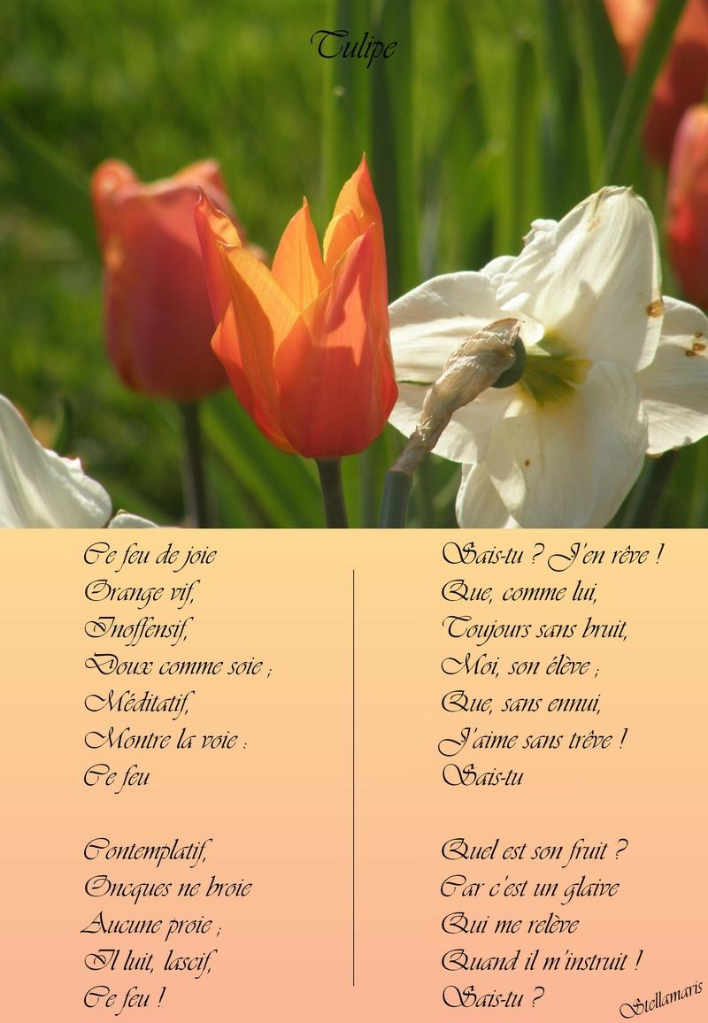 Tulipe / / Ce feu de joie / Orange vif, / Inoffensif, / Doux comme soie ; / Méditatif, / Montre la voie : / Ce feu / / Contemplatif, / Oncques ne broie / Aucune proie ; / Il luit, lascif, / Ce feu ! / / Sais-tu ? J'en rêve ! / Que, comme lui, / Toujours sans bruit, / Moi, son élève ; / Que, sans ennui, / J'aime sans trêve ! / Sais-tu / / Quel est son fruit ? / Car c'est un glaive / Qui me relève / Quand il m'instruit ! / Sais-tu ? / / Stellamaris