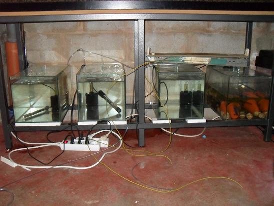 ma shrimproom et fishroom Sdc12138-1d75d9d