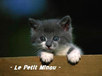 ~ Le Petit Minou ~ Index du Forum