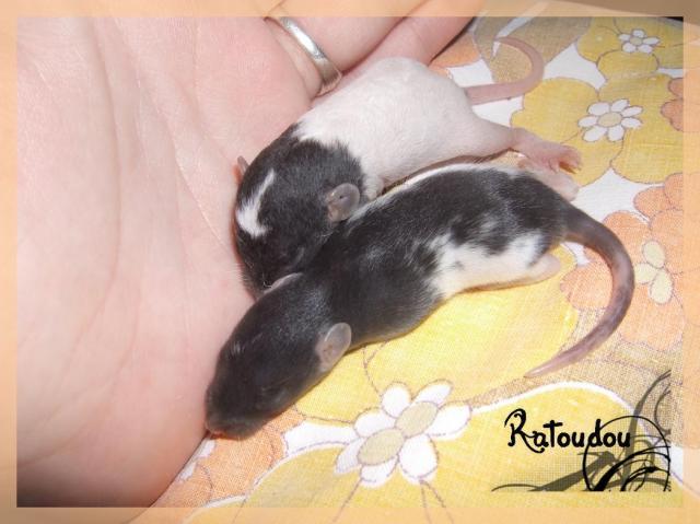 [25] Ma petite Lolita est maman ^^ Dscf5178-101a008